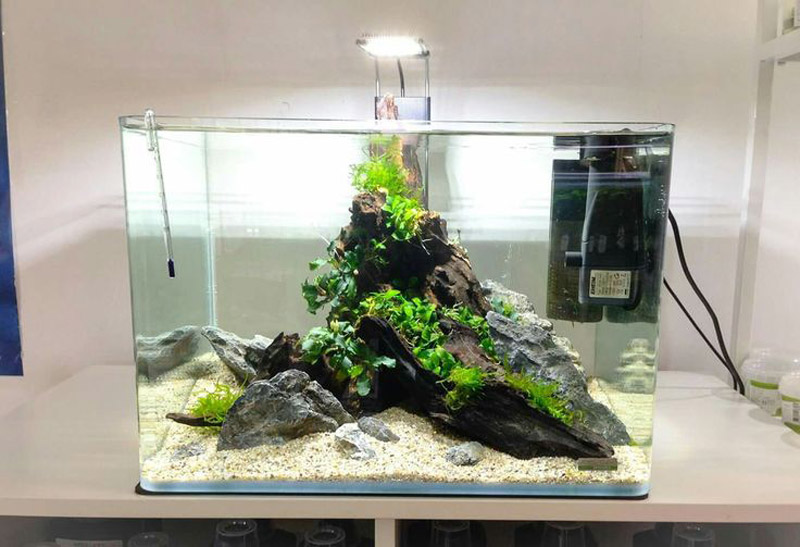 aae420184eba775fa26b167d8b553d32--aquarium-design-aquarium-ideas.jpg