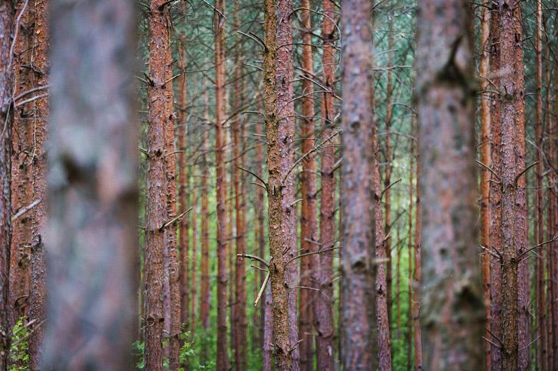 depositphotos_113738234-stock-photo-tree-trunks-in-forest.jpg