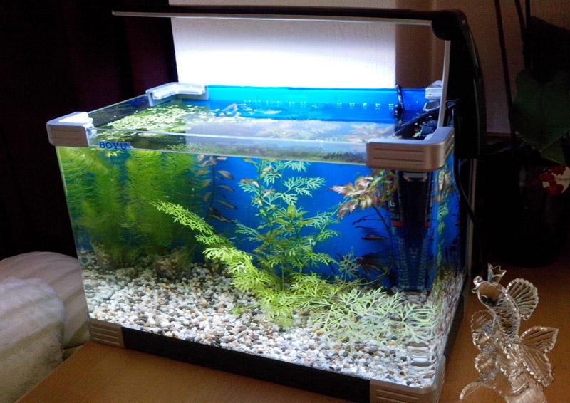 akvarium-boyu-30-litrov-4-6310384.jpg