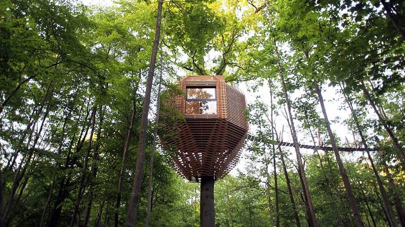 ساخت خانههای لوکس در نوک درختان