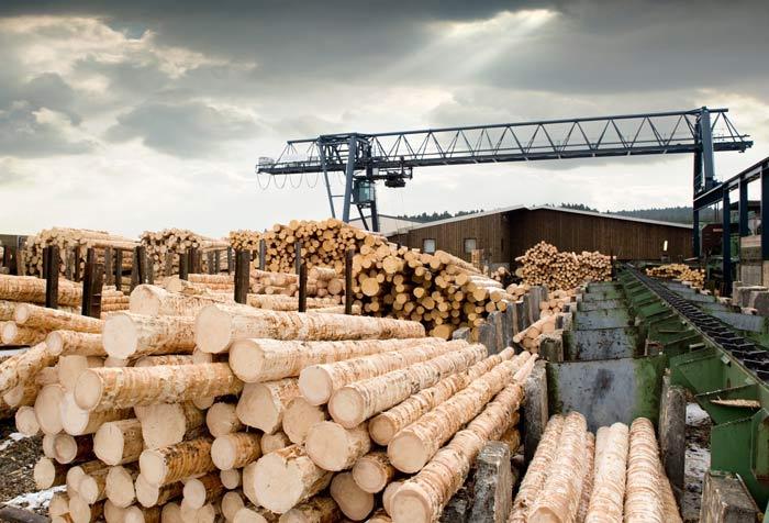 آشنایی با فرآوری چوب در صنعت مبلمان