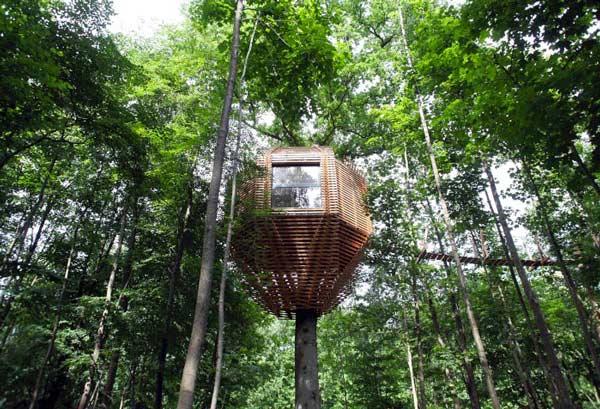 ساخت خانه درختی های لوکس در نوک درختان